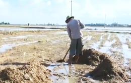 Bình Định: Nước lũ rút, ruộng đồng bị bồi lấp và sạt lở