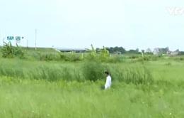Đất ruộng bỏ hoang sau khi có đường cao tốc Hà Nội - Hải Phòng