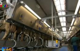 Giá sữa giảm mạnh, nông dân nuôi bò ở Đức chồng chất khó khăn