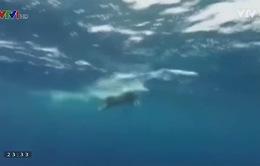 Cụ ông 73 tuổi đạt kỷ lục bơi vượt eo biển