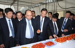 Phó Thủ tướng Nguyễn Xuân Phúc thăm, chúc Tết tại tỉnh Hải Dương