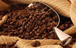 Giá cà phê thế giới có xu hướng tăng do thiếu hụt nguồn cung