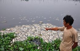Cá chết hàng loạt tại An Giang, Đồng Tháp do nước nhiễm hóa chất