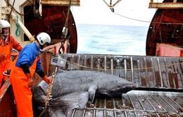 Cá mập Greenland có tuổi thọ kỷ lục lên tới 400 tuổi