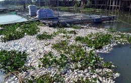 Cá chết hàng loạt trên sông Sa Lung