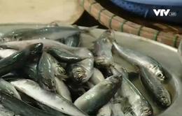 Hà Tĩnh đánh giá thiệt hại, hỗ trợ ngư dân sau sự cố môi trường