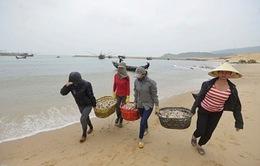 Lần đầu công bố thiệt hại về việc làm của ngư dân 4 tỉnh Miền Trung