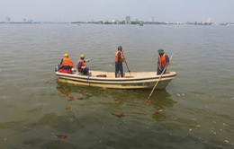 Cá chết ở Hồ Tây có thể do tầng đáy ô nhiễm nặng