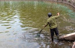 Thủ tướng yêu cầu xử lý vụ cá chết ở Hồ Tây