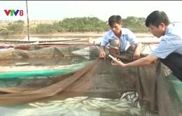 Bộ NN&PTNT chỉ đạo không tiêu thụ hải sản không an toàn