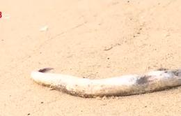 Quảng Bình tích cực ngăn chặn việc tiêu thụ cá chết