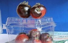 Cà chua đen chocolate giá cao gấp 10 lần cà thường vẫn được săn lùng