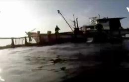 Bí quyết nuôi thành công cá hồi trên biển tại Hàn Quốc