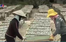 Quảng Nam: Hải sản khô rớt giá, ngư dân gặp khó