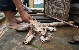 Thanh Hóa: Cá chết trắng do mưa lũ