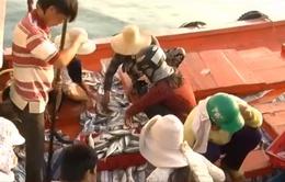 Tấp nập mua bán hải sản ở cảng cá Lý Sơn