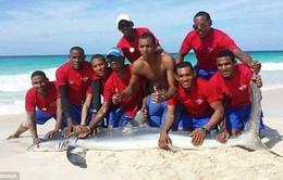 Cá mập chết tức tưởi vì bị du khách lôi lên bờ chụp ảnh