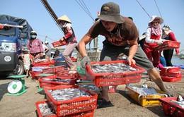 Giám sát, vận động ngư dân không khai thác hải sản tầng đáy từ Hà Tĩnh đến TT-Huế