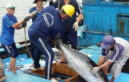 Bình Định chọn cá ngừ là mặt hàng nông sản chủ lực