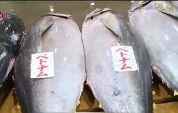 Vì sao giá cá ngừ đại dương luôn thấp?