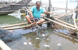 Cá nuôi ở Thừa Thiên - Huế chết do bị sốc