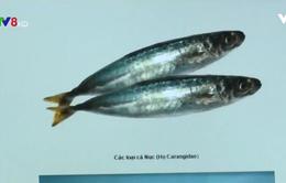 TT-Huế triển khai nhiều biện pháp giúp người dân lựa chọn cá an toàn