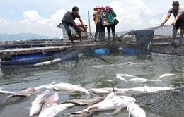 Cá trên sông Chà Và tiếp tục chết