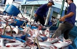 Thận trọng khi tăng diện tích nuôi cá tra
