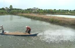 Cần giảm tỷ lệ vi phạm chất kháng sinh của cá tra Việt Nam