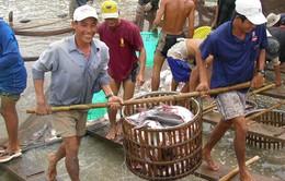 Trung Quốc đột ngột giảm mua, DN và người nuôi cá tra thận trọng
