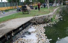 Công bố nguyên nhân cá chết trắng tại hồ công viên Đà Nẵng sau 5 ngày nữa