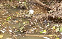 Cá chết hàng loạt trên sông Sa Lung do xả đập