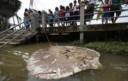 Thái Lan làm sạch nước sông Mae Klong