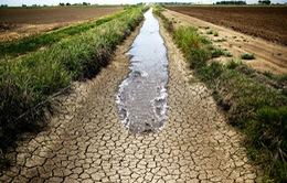 California đối phó với hạn hán kéo dài