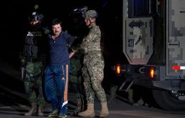 Cận cảnh vụ đột kích nơi ẩn náu của trùm ma túy Mexico