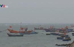 Quảng Ngãi: Đầu tư 200 tỷ đồng xây cảng Bến Đình, Lý Sơn