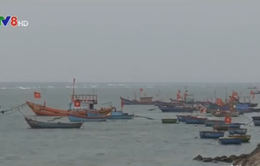 Chiều nay (28/4), Đà Nẵng sẽ có kết quả phân tích nước biển