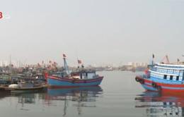 TT-Huế: Tàu đánh bắt xa bờ công suất lớn tăng mạnh