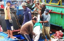 Hai tháng, cả nước đánh bắt được gần 3.000 tấn cá ngừ