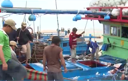Vướng mắc trong triển khai đề án sản xuất cá ngừ theo chuỗi