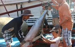 Nhiều tàu câu cá ngừ đại dương có lãi