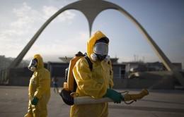 WHO cảnh báo sự lây lan nguy hiểm của virus Zika