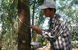 Campuchia sẽ tạo mọi điều kiện để doanh nghiệp Việt đầu tư trồng cao su
