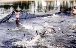 Cấm nghề Te để bảo vệ hệ sinh thái hồ Trị An
