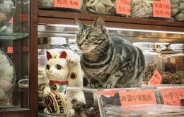 Văn hóa mèo tại các cửa hàng ở Hong Kong (Trung Quốc)