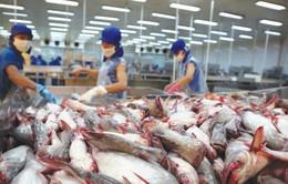 Tiêu chí chọn doanh nghiệp xuất khẩu cá tra vào Hoa Kỳ