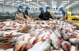 Xuất khẩu cá tra năm 2016 tăng gần 7%