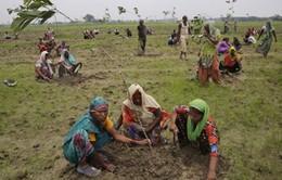 Ấn Độ lập kỷ lục thế giới: Trồng 50 triệu cây trong 24 giờ