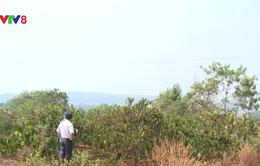 Hơn 150.000 ha cây trồng bị ảnh hưởng bởi khô hạn