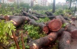 Hơn 500 cây xanh gãy đổ tại Hà Nội do ảnh hưởng của cơn bão số 1